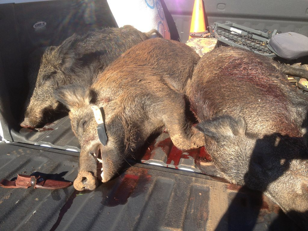 These three hogs were taken near Lawton, Ok on Nov. 17, 2011 by Jarrod Miller. The knife used to clean these hogs is a BOB III that I had used some elk antler from Mr. Miller for the scales. Sheath by Mike Stott of Tahlequah, OK.