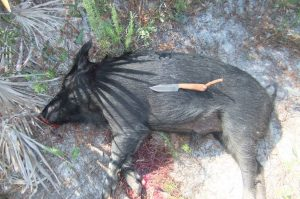 This hog was taken by Chris Deren and his sons while visiting his sons in Florida. It was taken on an island that was restricted to primitive weapons and no vehicles. The hog is shown with one of my earlier models, a san mia Raven with Bois D'Arc scales. The deer was taken in the White River bottoms of Arkansas. Thanks for the pic, Chris.
